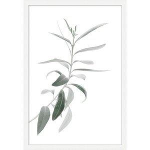 Still Plant 5