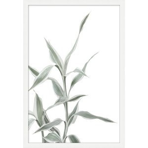 Still Plant 6