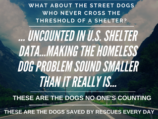 What about the street dogs?