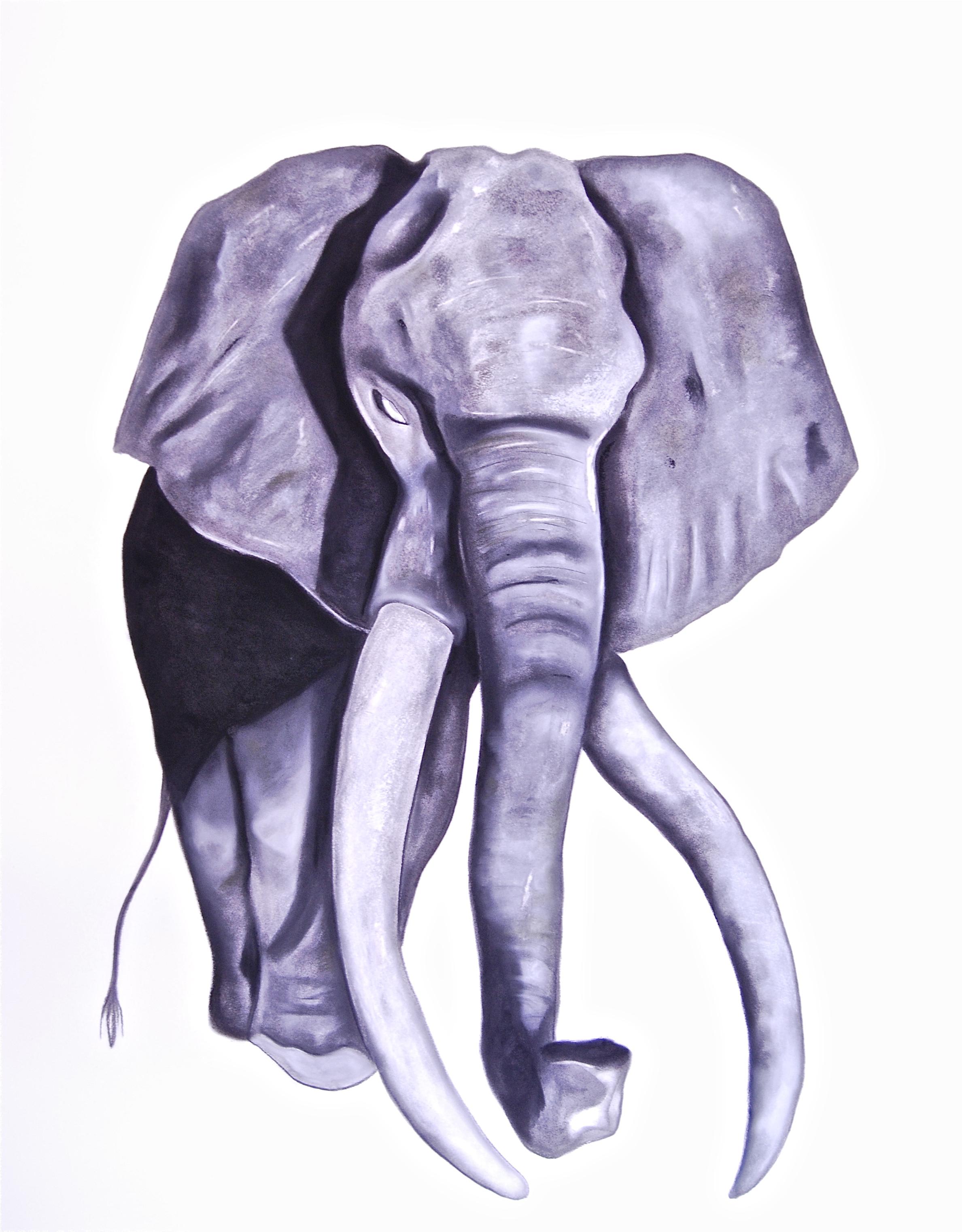 Elephas Africanus (Satao)