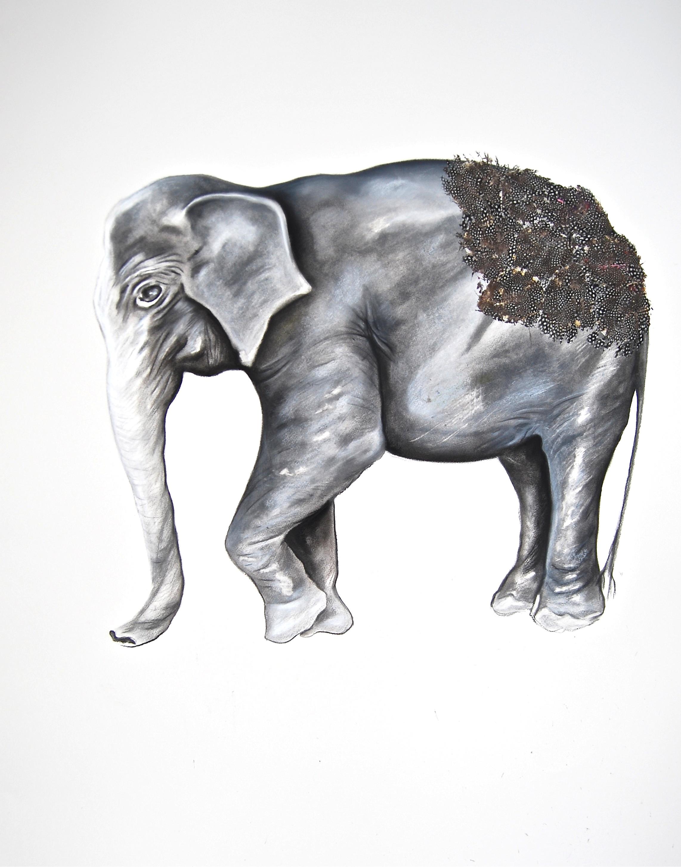 Elephas Maximus 1