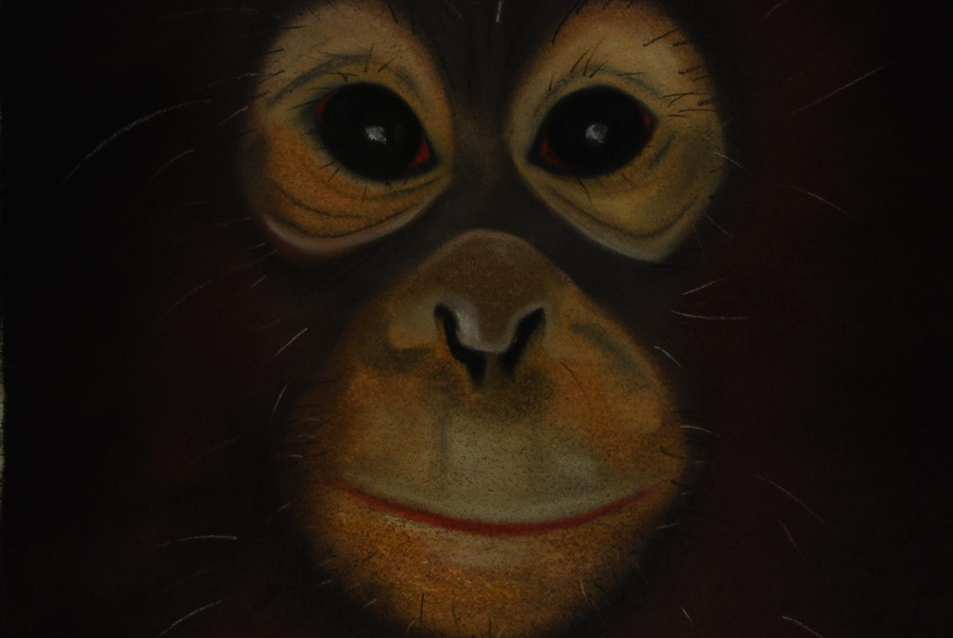 Apes 2 (close up)