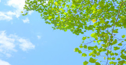 緑の風景1