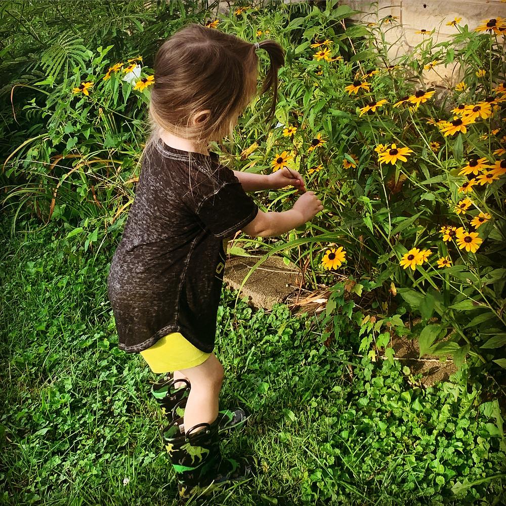 toddler picking black-eyed susans in a garden