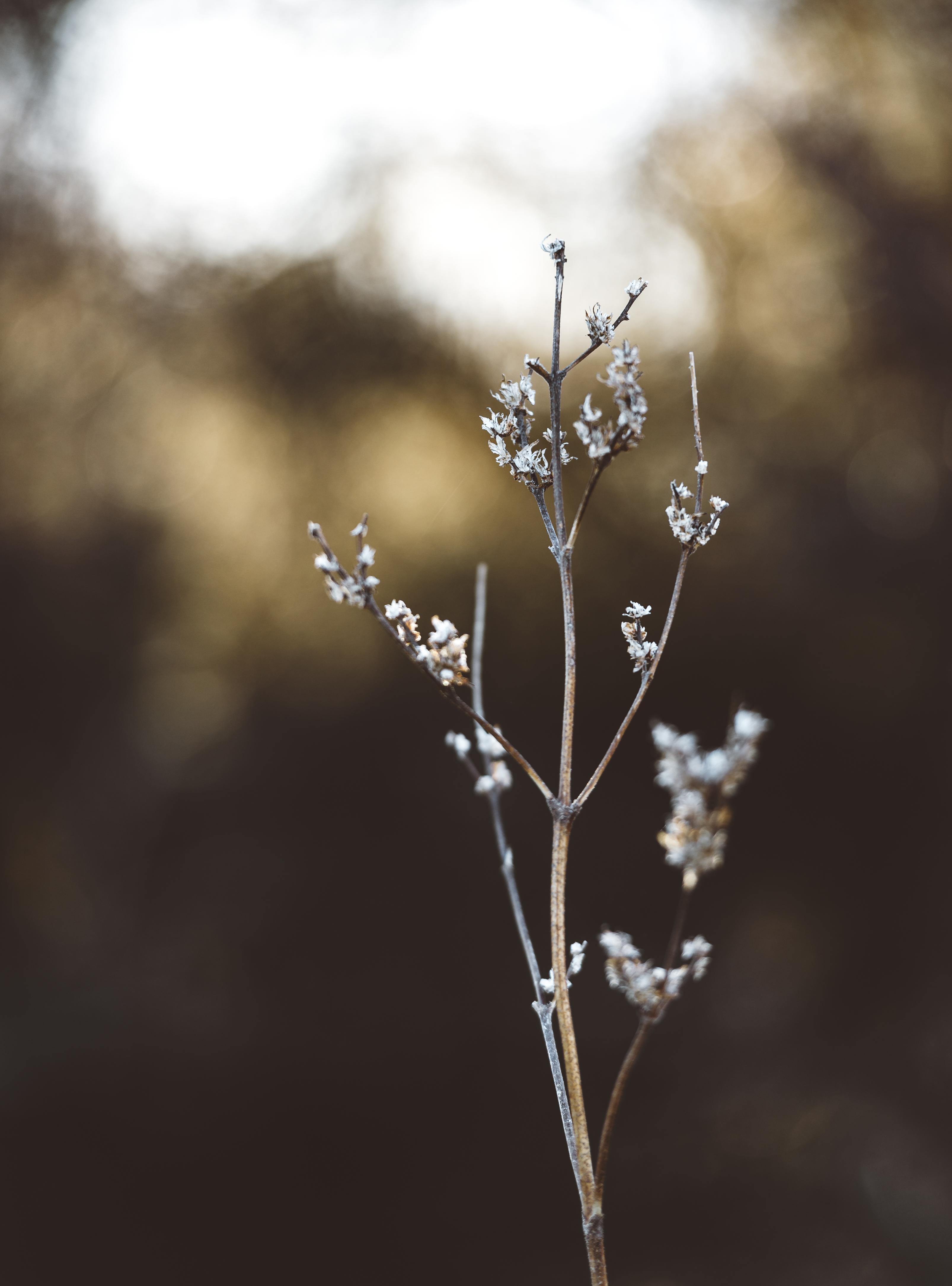 Plant still life