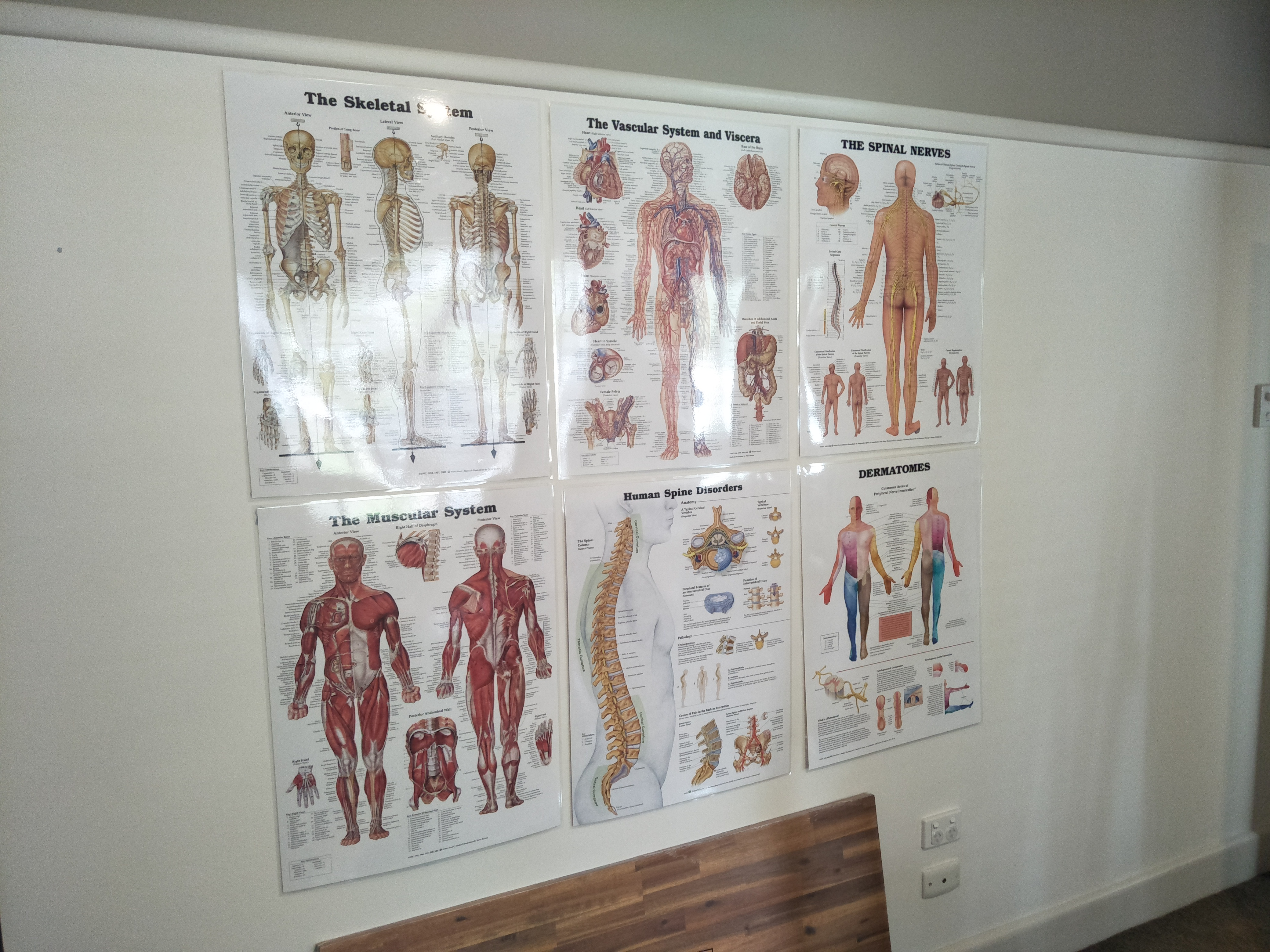 Anatomy posters.