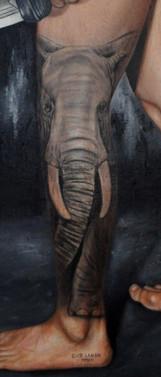 « Eléphant d'Afrique du Nord ». Cet éléphant aujourd'hui disparu, serait une possible sous-espèce de l'éléphant de savane d'Afrique moderne ( L.a.africana) et probablement de taille similaire à l'éléphant de forêt d'Afrique (L. cyclotis). Ce furent les fameux éléphants de guerre utilisés par Hannibal durant la Deuxième guerre punique.
