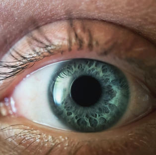 Comprehensive Iris Analysis