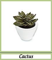 Cactus artificiels