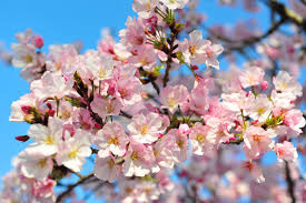 Spring has sprung and so have the trees and my allergies!