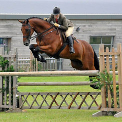 Justine is one of the most prolific Working Hunter winners on the UK circuit