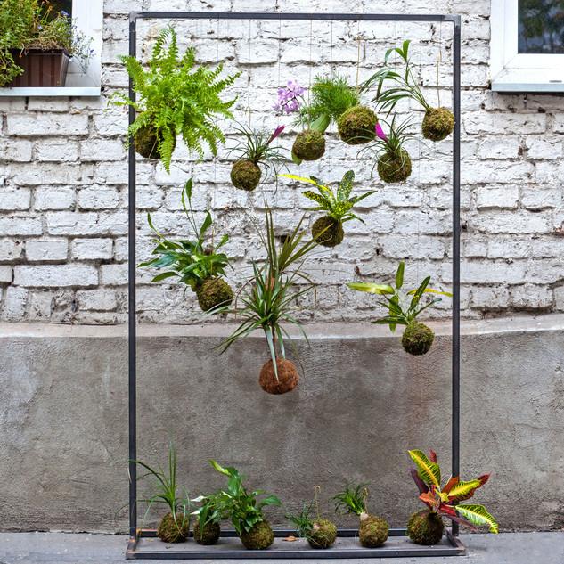 kokedamy- rośliny.jpg