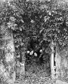 Treehouse..jpg