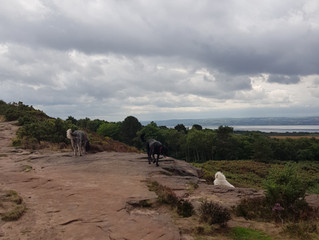 A lovely day on the hill at Thurstaston before the rain.