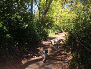 Joyful Dogs in the May sunshine!