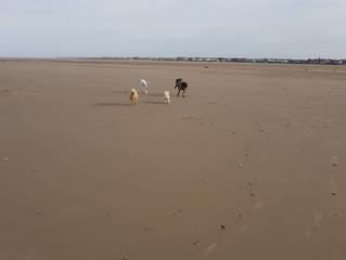 Beach Walk Joy!