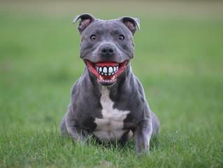 You won't like me if I don't smile!