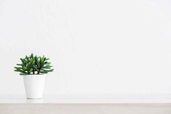 Artificial succulent plant in ceramic po