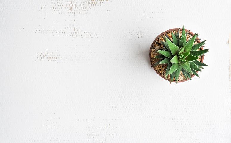 Pot cactus on white background Texture.j