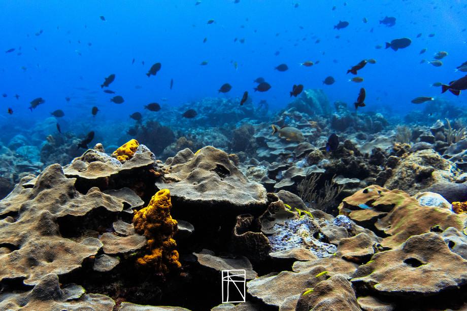 Hard coral scene