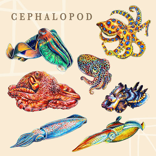 Cephalopod Sticker Pack