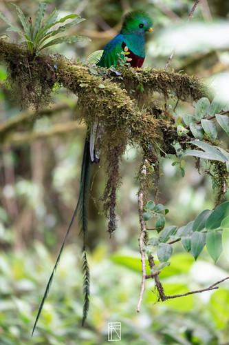 Quetzal best
