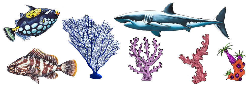 fish and coral illustrations .jpg