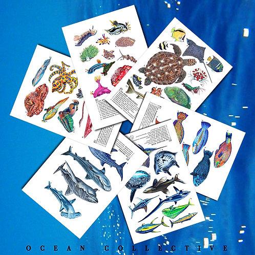 Ocean Collective
