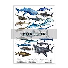 POSTERS .jpg
