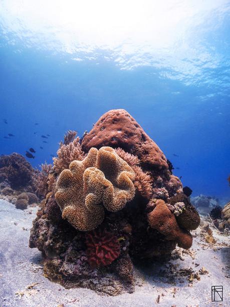 Coral Drift Dive
