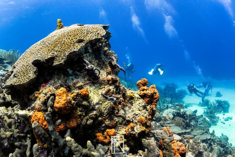 Tobago coral reefs