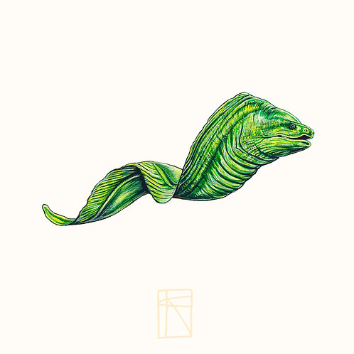 7/111 Giant moray eel Original
