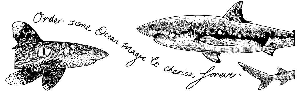 shark banner 1 .jpg