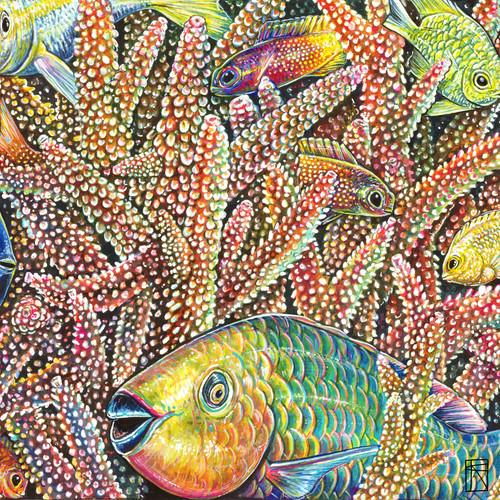 Coral Secrets