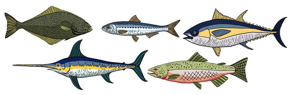 fish  illustrations .jpg