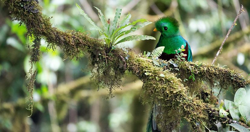 Quetzal%20so%20pretty%20lookin%20%20_edi