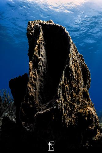 Tobago Sponge