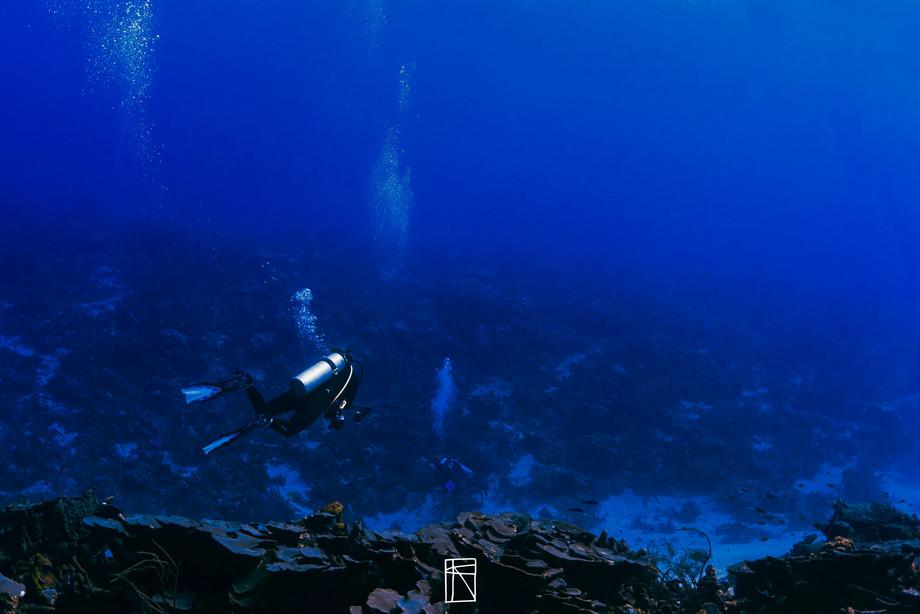 Coral scene Tobago