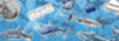 Sticker banner  without text .jpg