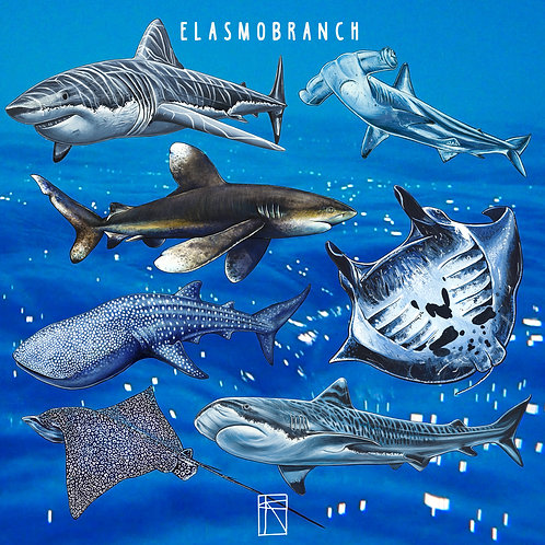 Elasmobranch Sticker Pack