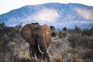 Elephant, Tahita Hills, Kenya, Wildlife