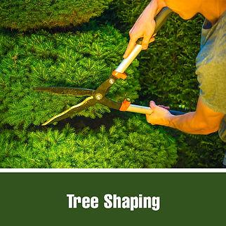 treeshaping.jpg