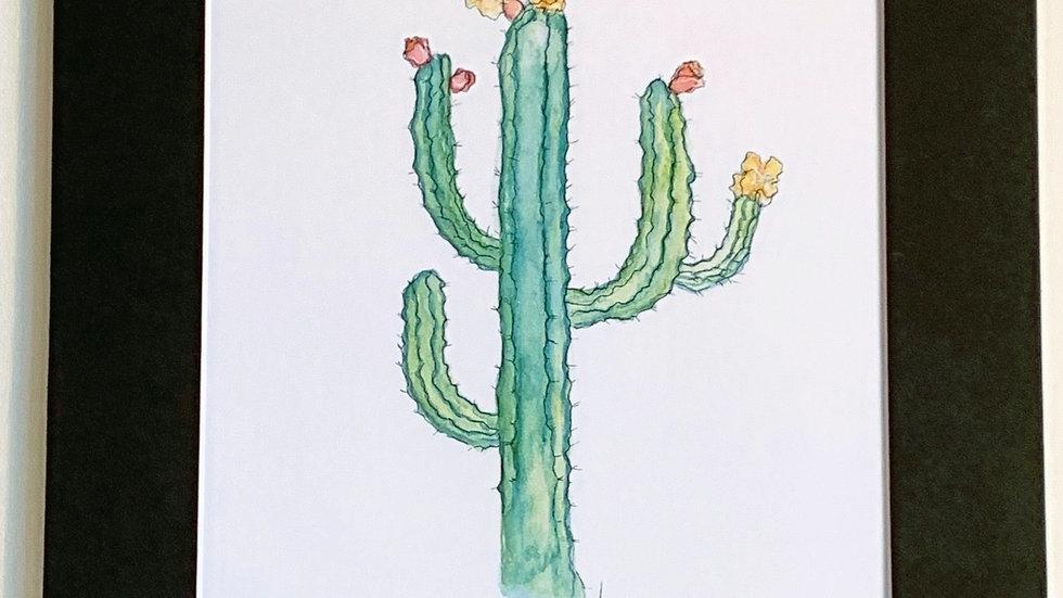 Desert Dream Cactus
