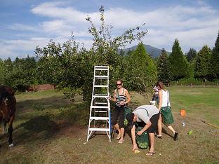 Fruit Tree Project.jpg