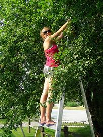Fruit Tree Project 2.jpg
