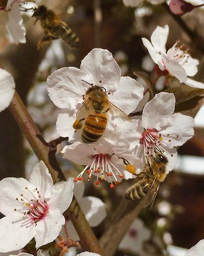 Pollinators 2.jpg