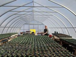 MESY Greenhouse