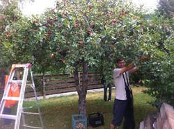 Fruit Tree Project