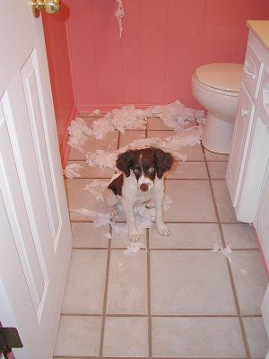puppy feels neglected tears up bathroom in retaliation