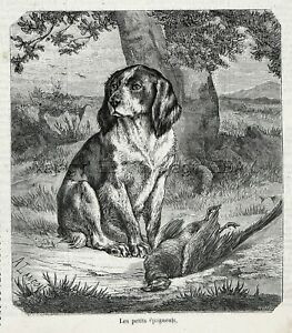 lithograph of earlier version Brittany Spaniel